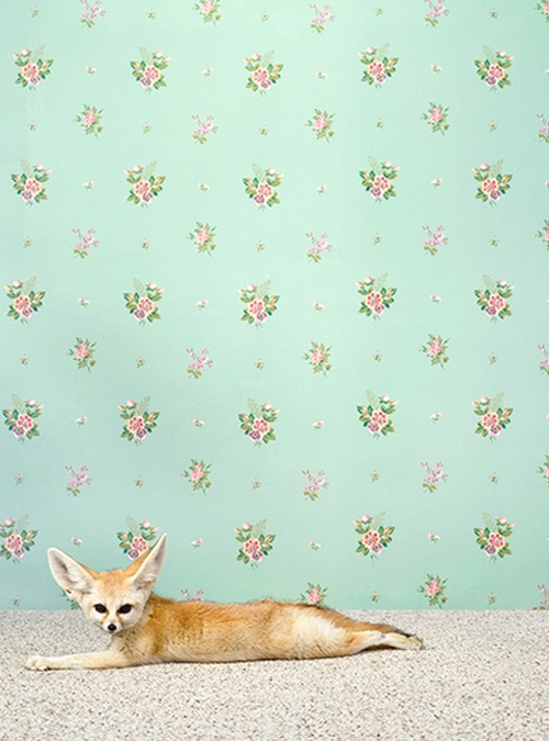 Baby Fox Print By Catherine Ledner