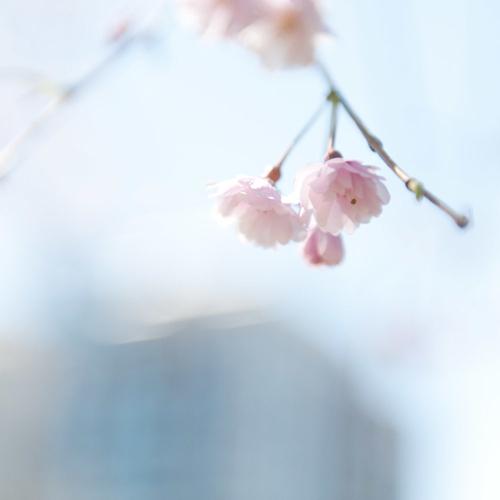 spring-tess-atkinson-florals