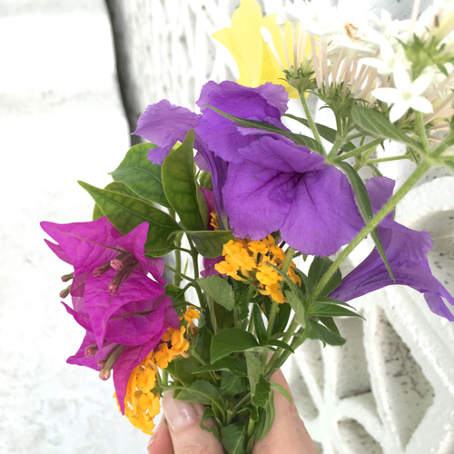 Brightly Colored Flowers Growing In Coastal Florida