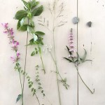 Sunday Bouquet: Pink Flowers, Basil, and Thyme