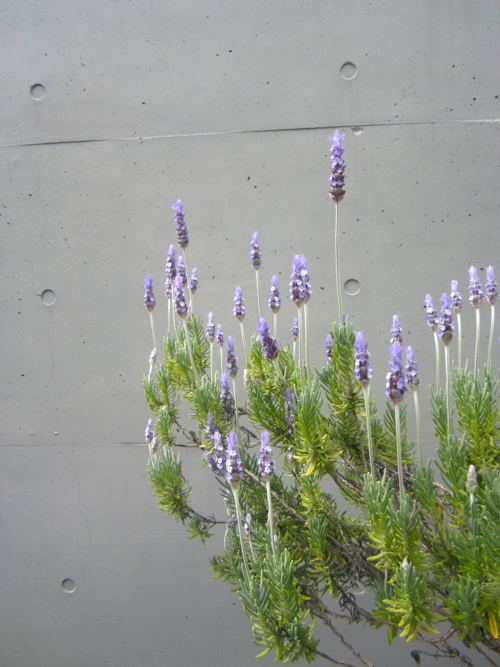 Purple Flowers Against Concrete Wall in Tokyo Japan By StyleCarrot