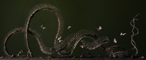 Boston Artist Tara Sellios Snake Photo
