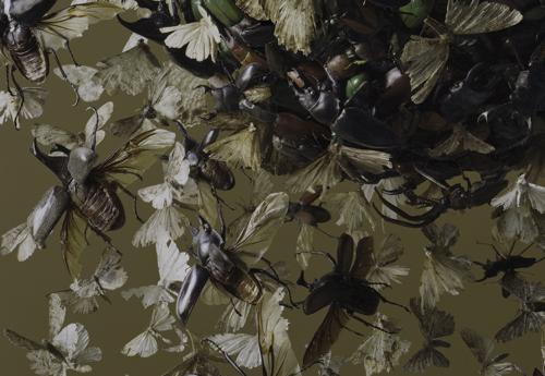 Boston Artist Tara Sellios Insect Photo