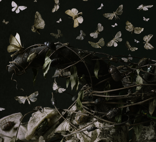 Boston Artist Tara Sellios Moth Photo