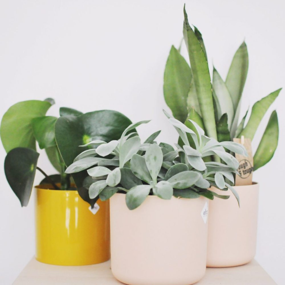 elho planten
