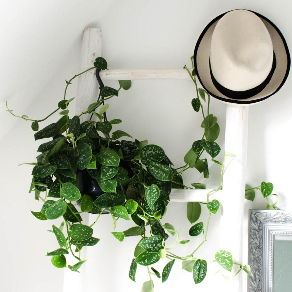 Ladder hangplant