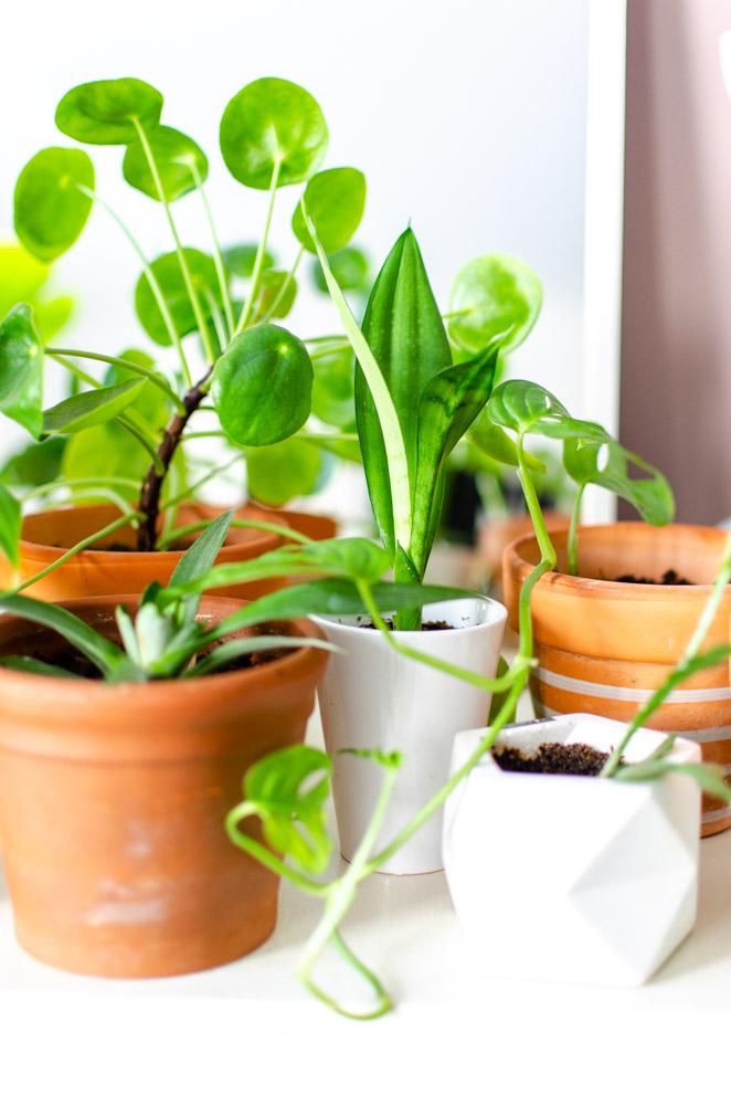 stekjes planten