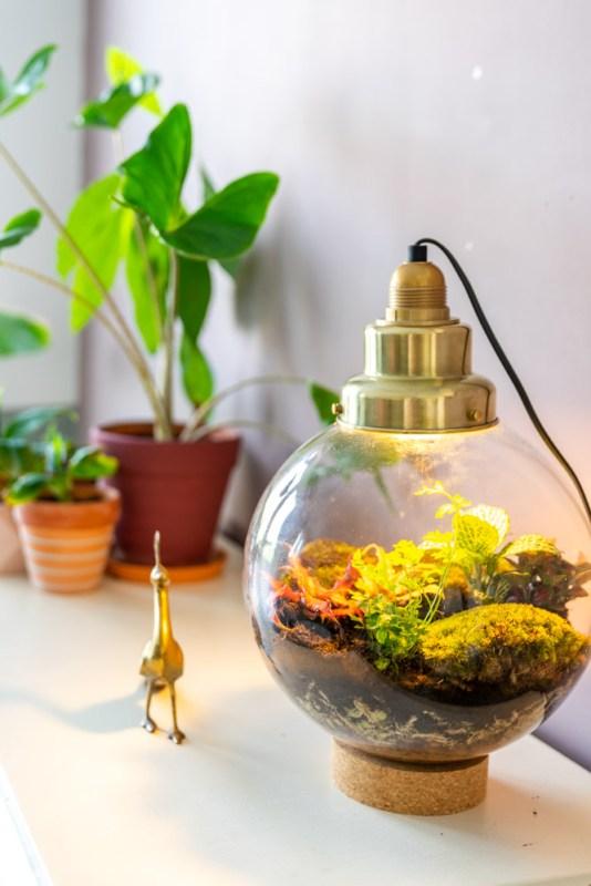 Spruitje Edisons Garden ecosysteem