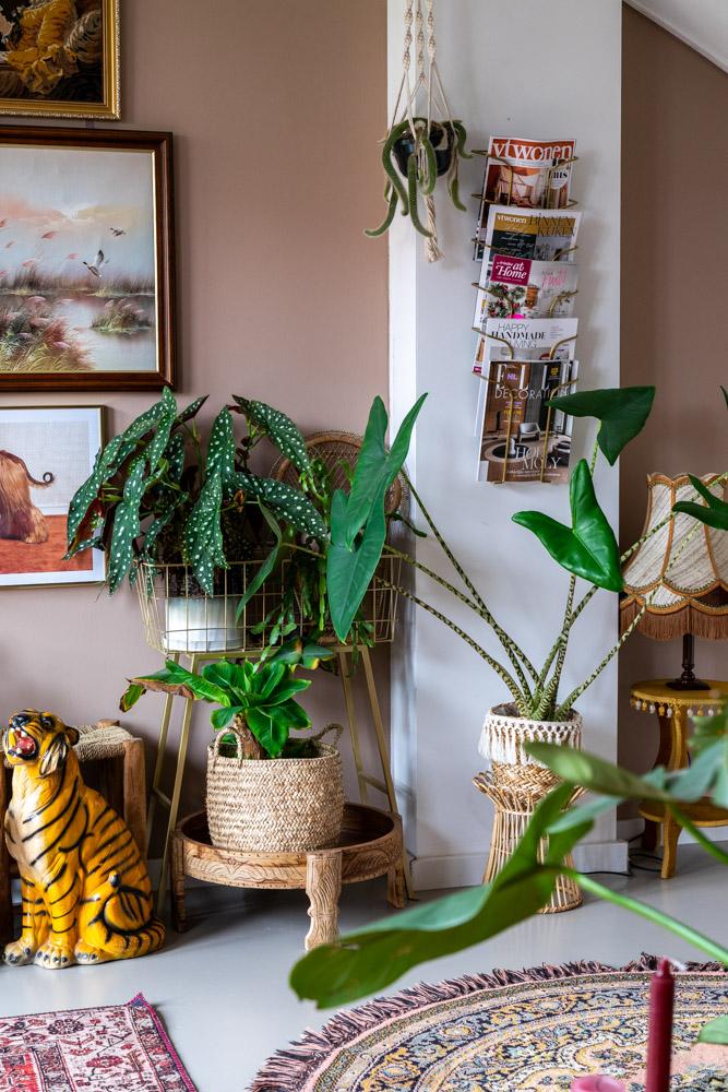 kamerplanten gaan dood