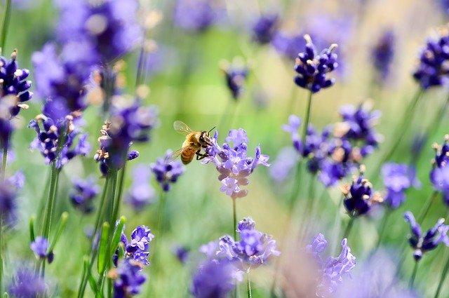 biodiversiteit tuin