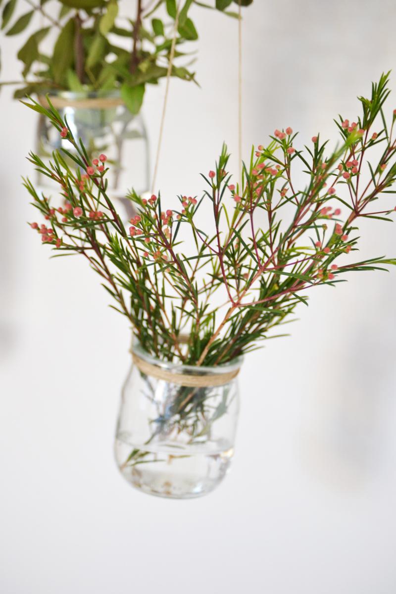 plantas-colgantes8