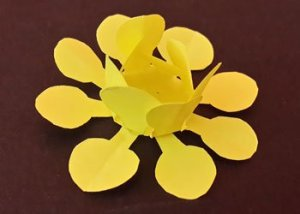 How to make paper flower?