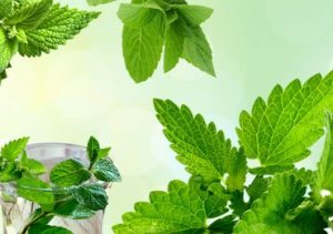 Beauty Benefits of Mint Leaves