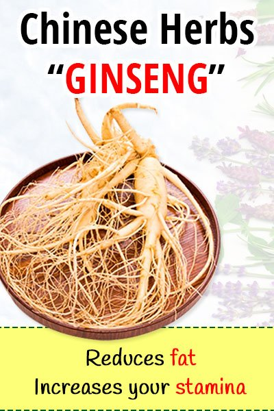 Ginseng Herb for Losing Weight
