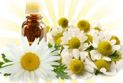 Chamomile-oil-for-hair-growth