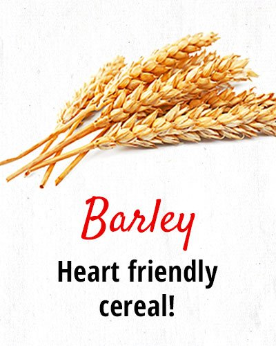 Barley – Heart Friendly Cereal