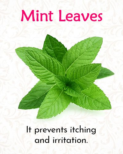 Mint Leaves For Shingles