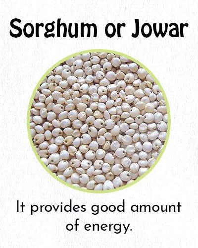 Sorghum or Jowar Millet