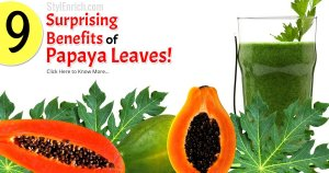 How Papaya leaves Juice is Beneficial for Healthy Life?