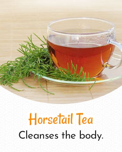 Horsetail Tea For Weight Loss