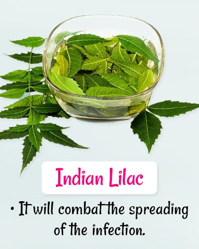Indian Lilac For Chickenpox