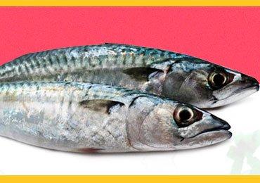 Health Benefits Of Consuming Sardine Fish