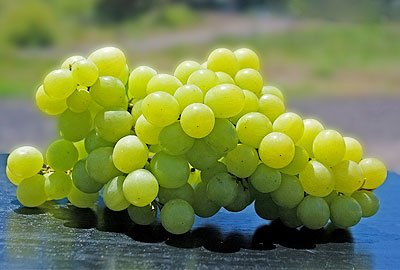 Grapes are a wonder fruit for diabetics