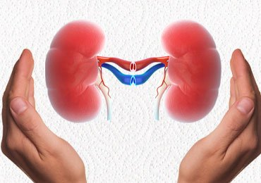 How To Keep Your Kidneys Healthy