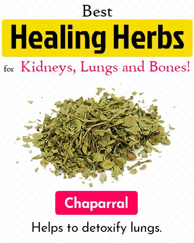 Chaparral Healing Herb