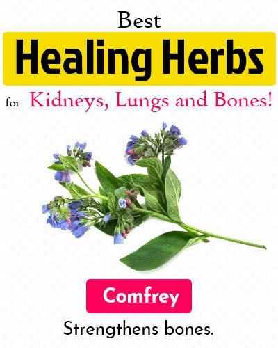 Comfrey Healing Herb
