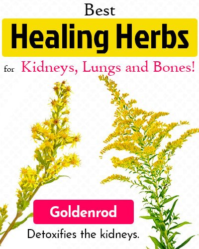 Goldenrod Healing Herb