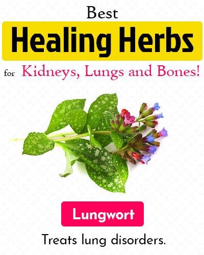 Lungwort Healing Herb
