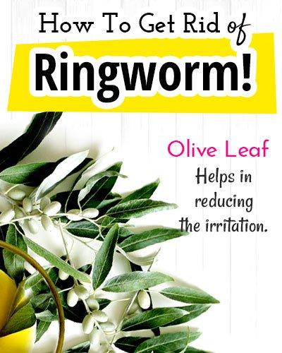 Olive Leaf for Ringworm