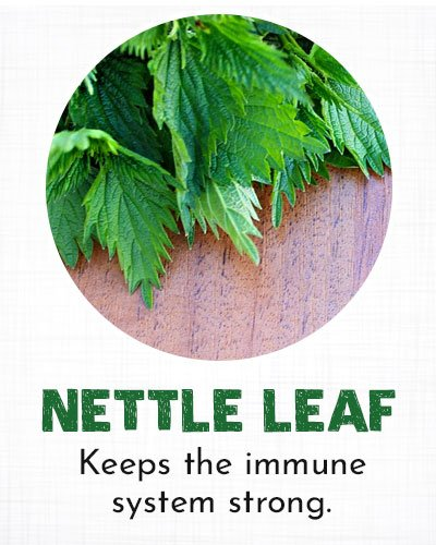 Nettle Leaf for Allergy