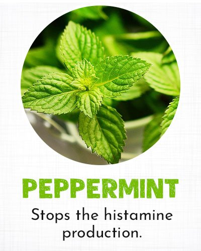 Peppermint for Allergy