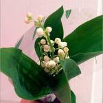 すずらんの正しい育て方!鉢植えは?花が咲かない原因と対策、花言葉も!