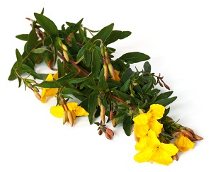 how to use evening primrose oil for hair loss