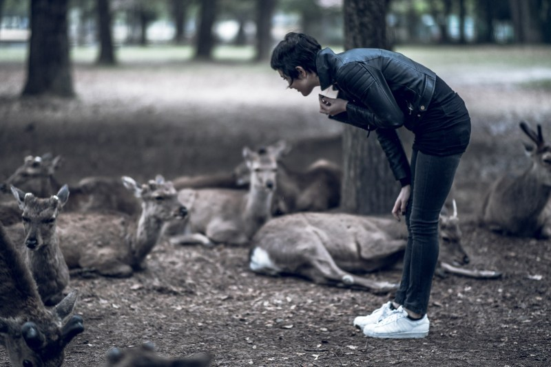 Have You Seen This Japanese Deer City? A Photo Diary of Nara, Osaka and Kyoto 12