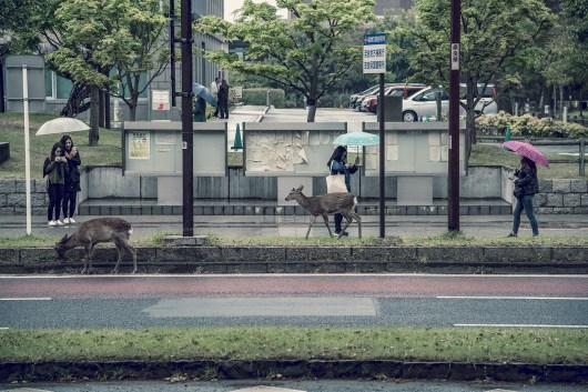 Have You Seen This Japanese Deer City? A Photo Diary of Nara, Osaka and Kyoto 5