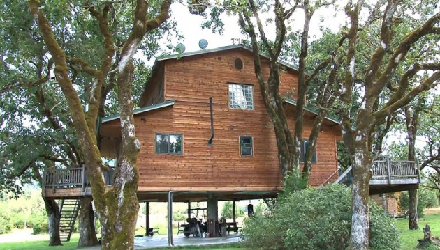back side of tree house