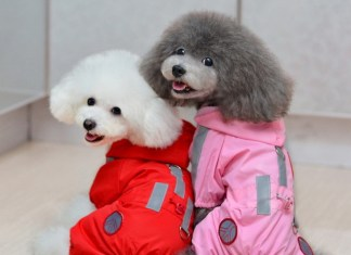 Dog Rain Coats Designs For You Puppy