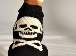 Handmade Woolen Sweaters For Your Cute Puppies