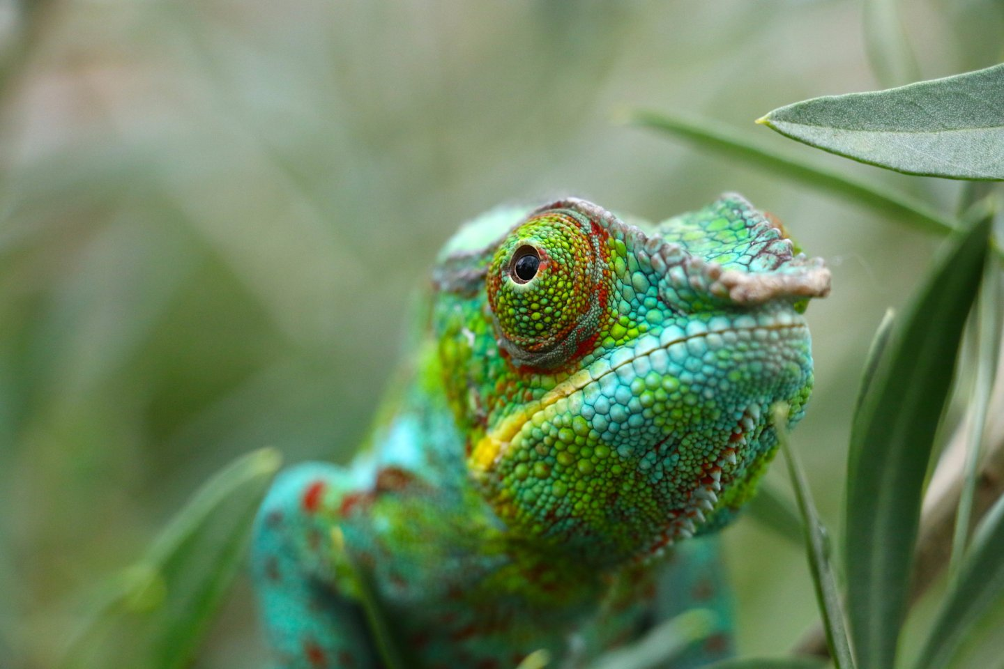 This chameleon is judging you