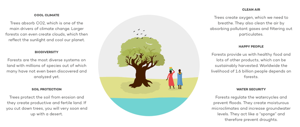 why does ecosia plant trees?