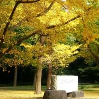 「代々木公園」の『黄金ロード』