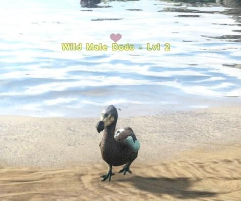 dodo love
