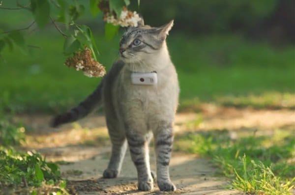 Weenect Cats 2 avis test