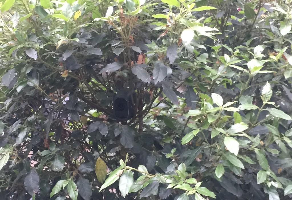 Arlo Pro camouflage jardin