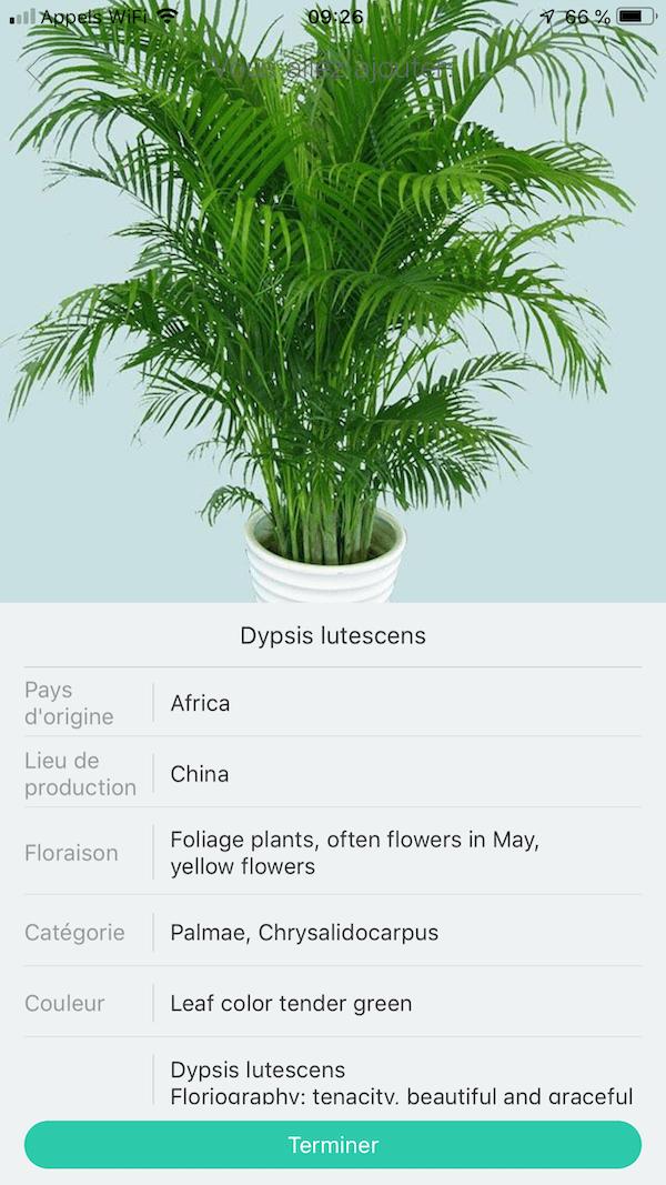 fiche plante Flower Care et Mi Plant Flower