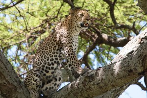 Africa Through My Lens: Photo by Author Suanne Schafer